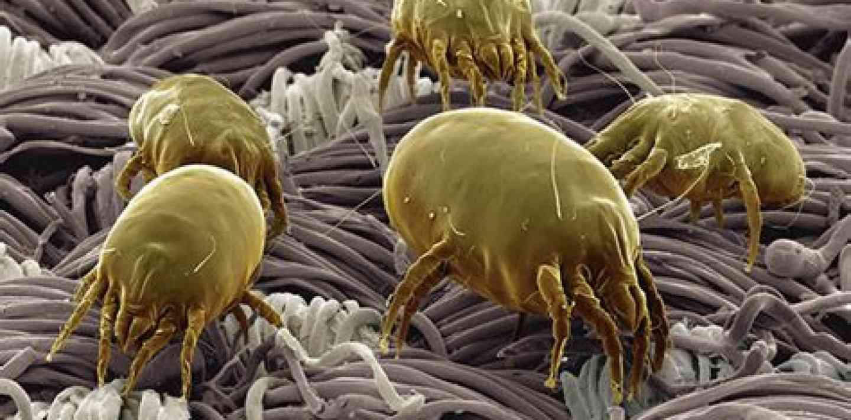 Eficacia de la acupuntura en el tratamiento de la alergia a los ácaros del polvo