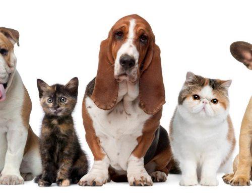Consejos para los dueños de mascotas durante el periodo de confinamiento por Covid-19